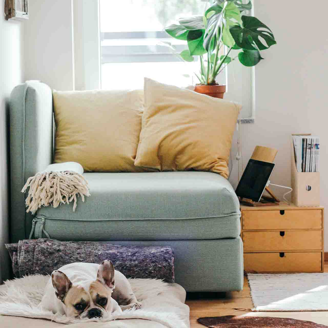 Dog sitting on a mat inside a cosy home