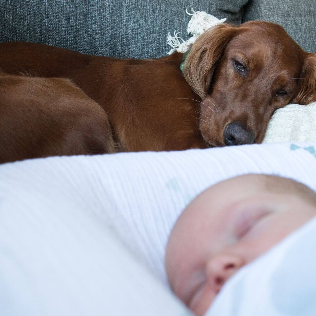 Dog and a baby asleep